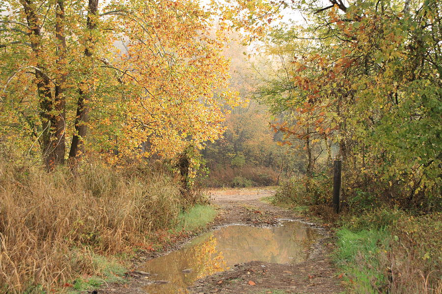 Landscape Photograph - Fall Color  by Iris Page