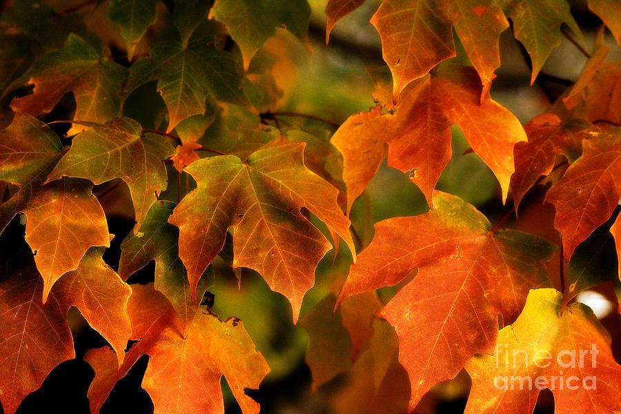 Landscape Photograph - Fall Color by Melissa Petrey
