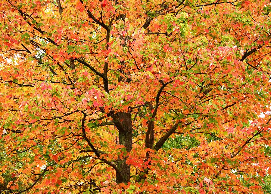 Fall Photograph - Fall Color Palette by Judy Genovese
