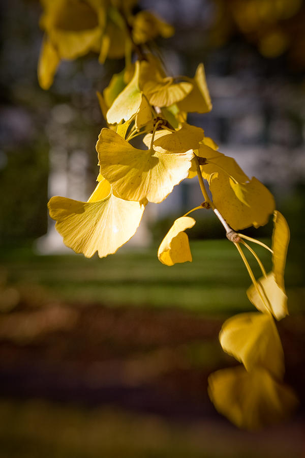 Color Photograph - Fall Colors 6737 by Timothy Bischoff