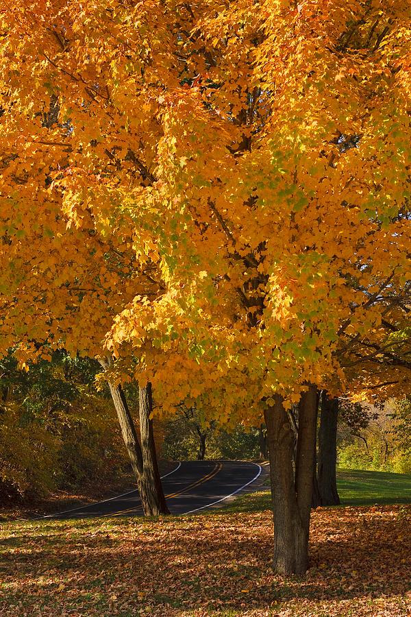 Autumn Photograph - Fall Colors by Adam Romanowicz