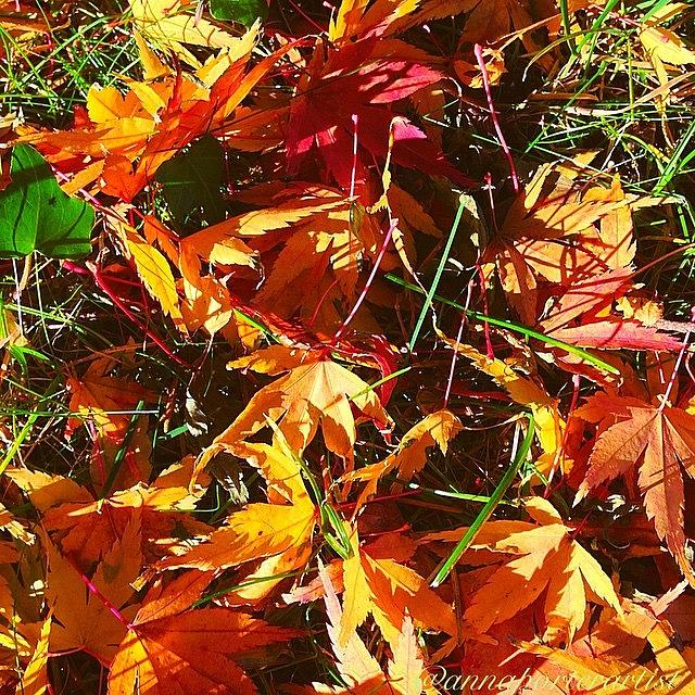 Fall Photograph - Fall Colors in annasgardens by Anna Porter