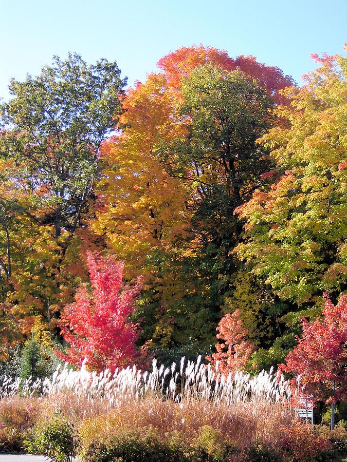 Landscape Photograph - Fall Colors by Gaetano Salerno