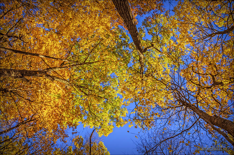 Falling Leaves Photograph - Fall Colors In The Sky  by LeeAnn McLaneGoetz McLaneGoetzStudioLLCcom