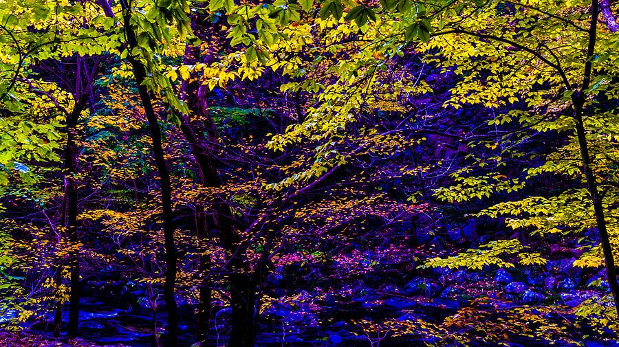 Autumn Photograph - Fall Colors by Louis Dallara