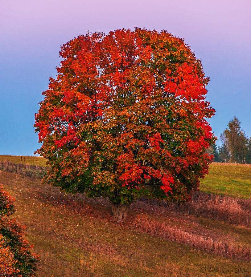 Poland Photograph - Fall Colors Over A Big Tree In Warmia In Poland During Twilight Hour by Julis Simo