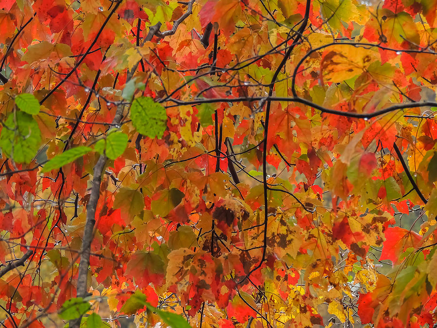 Nature Photograph - Fall Colors by Robert Mitchell