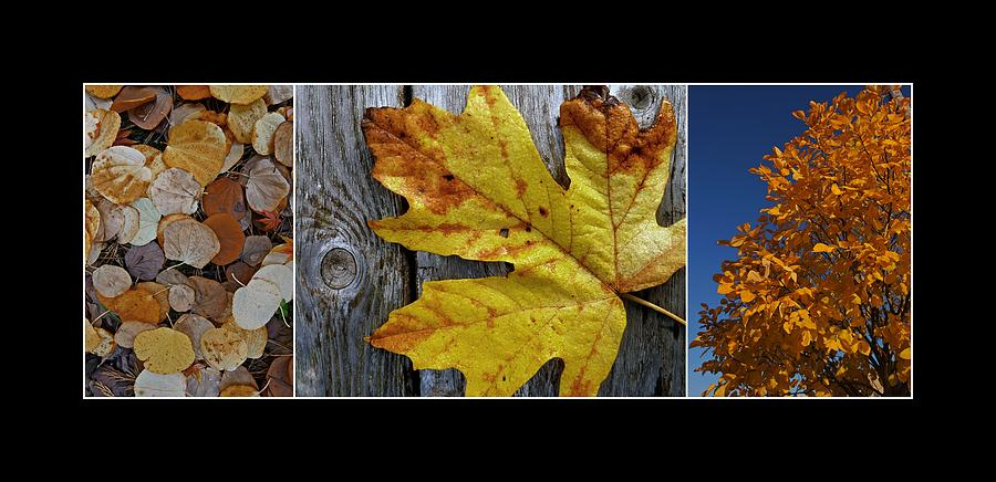 Autumn Photograph - Fall Colors Triptych by Patricia Strand