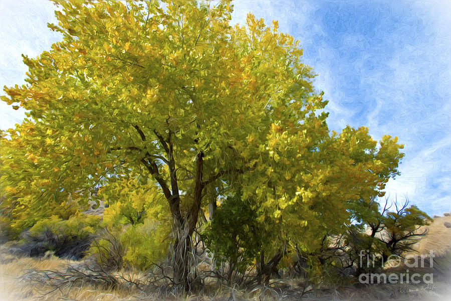 Trees Photograph - Fall Cottonwoods by Dianne Phelps