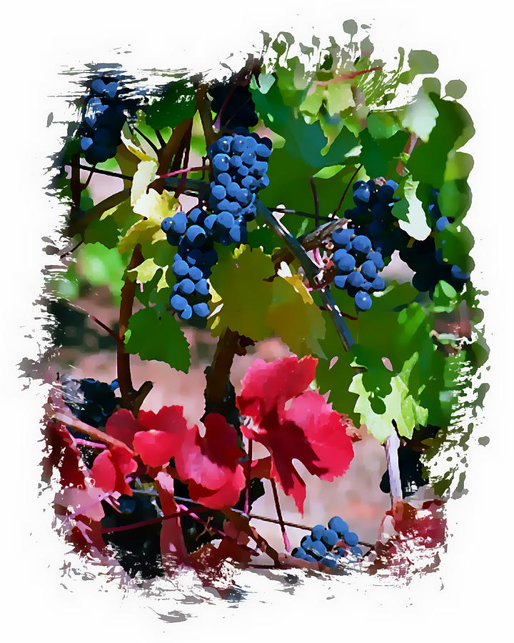 Wine Grapes Digital Art - Fall Delight II by Ken Evans