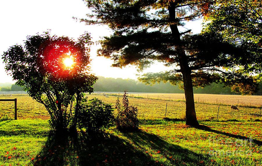 Sun Photograph - Fall Farm Sunrise 10 10 13 by Tina M Wenger