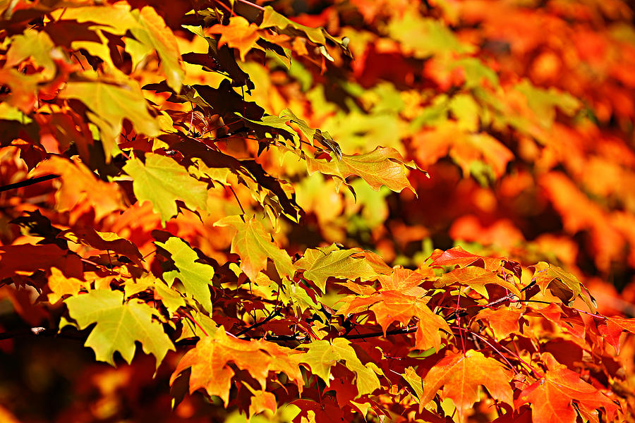 Autumn Photograph - Fall Foliage Colors 13 by Metro DC Photography
