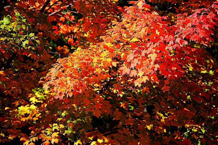 Autumn Photograph - Fall Foliage Colors 21 by Metro DC Photography