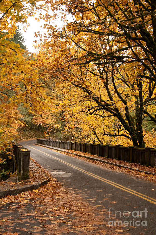 Fall Photograph - Fall Foliage On The Highway by Cari Gesch