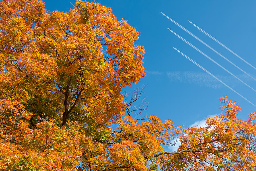 Tree Photograph - Fall Foliage With Jet Planes by Tom Mc Nemar