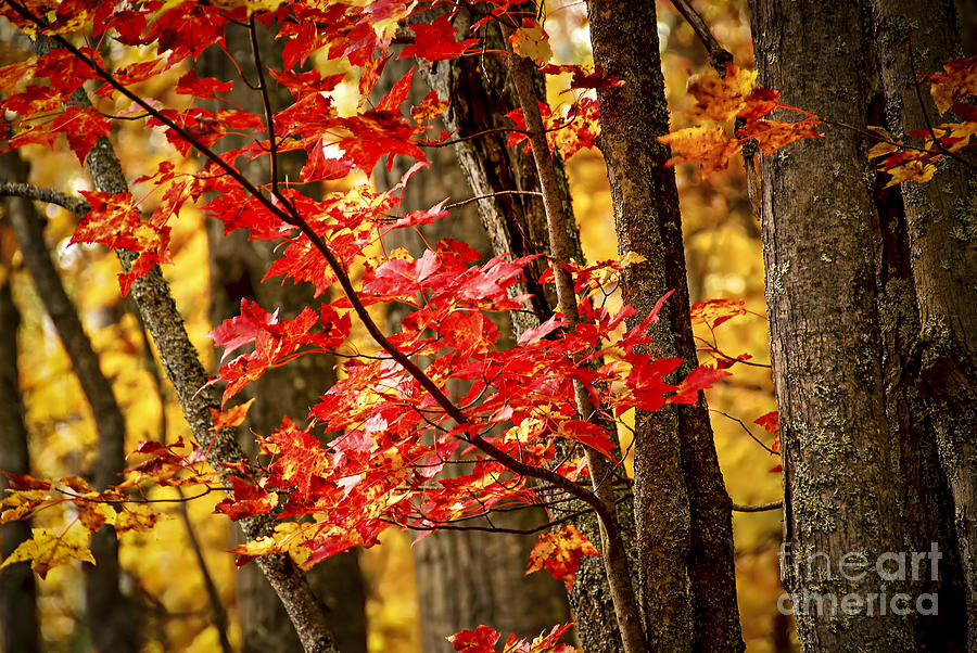 Fall Photograph - Fall Forest Detail by Elena Elisseeva