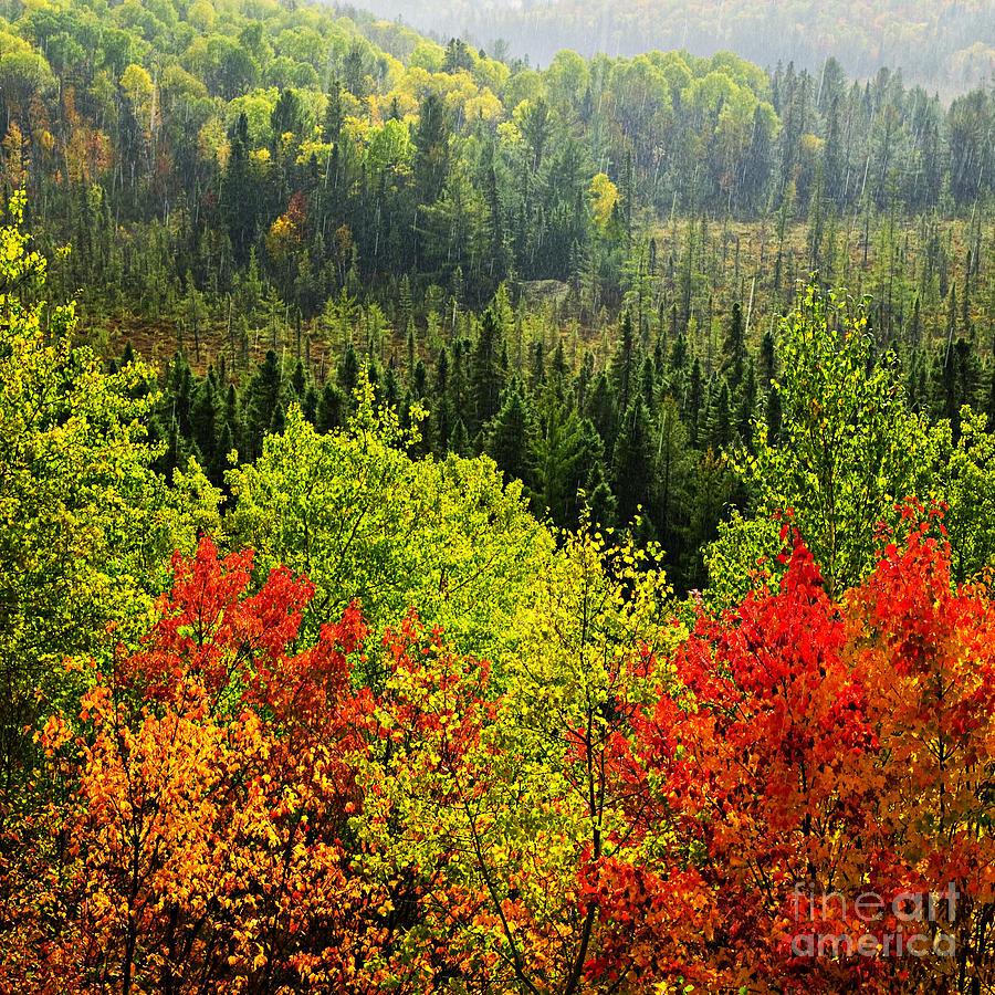 Autumn Photograph - Fall Forest Rain Storm by Elena Elisseeva