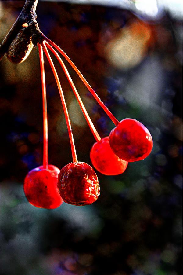 Fall Fruit Photograph