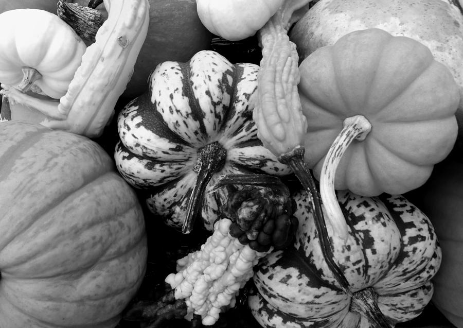 Fall Photograph - Fall Gourds Black And White by Erin Rednour