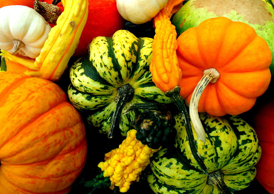 Fall Photograph - Fall Gourds by Erin Rednour