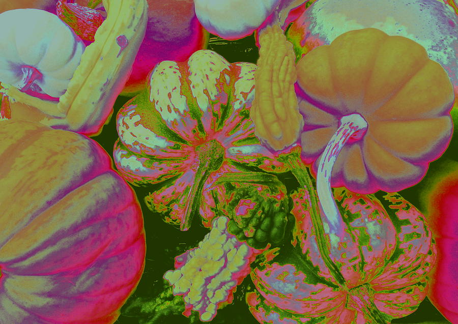 Fall Photograph - Fall Gourds Pinked by Erin Rednour