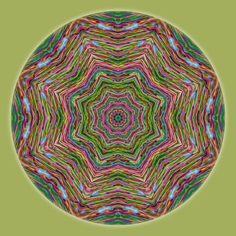Mandala Photograph - Fall Grass Mandala by Beth Sawickie