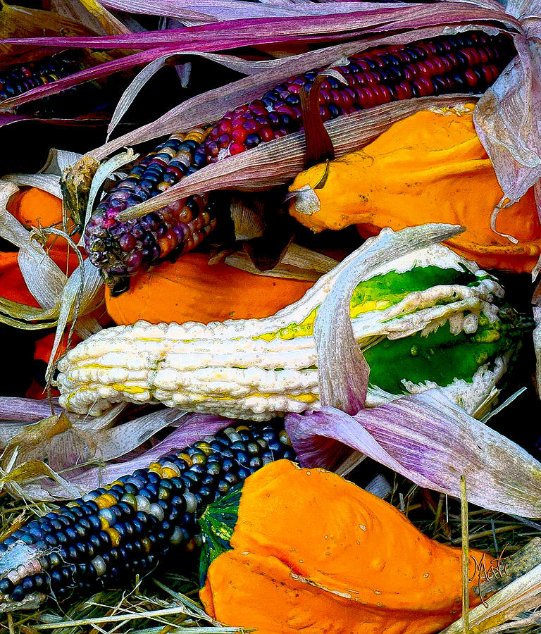 Fall Harvest Corn And Gourds Photograph