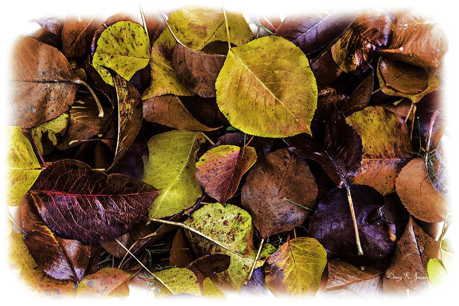 Fall Foliage Photograph - Fall Has Fallen by Barry Jones