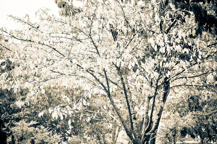 Abstract Photograph - Fall In Black And White by Ronda Broatch