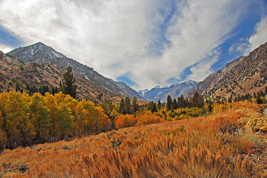 Fall Photograph - Fall In Lundy Canyon by Lynn Bauer