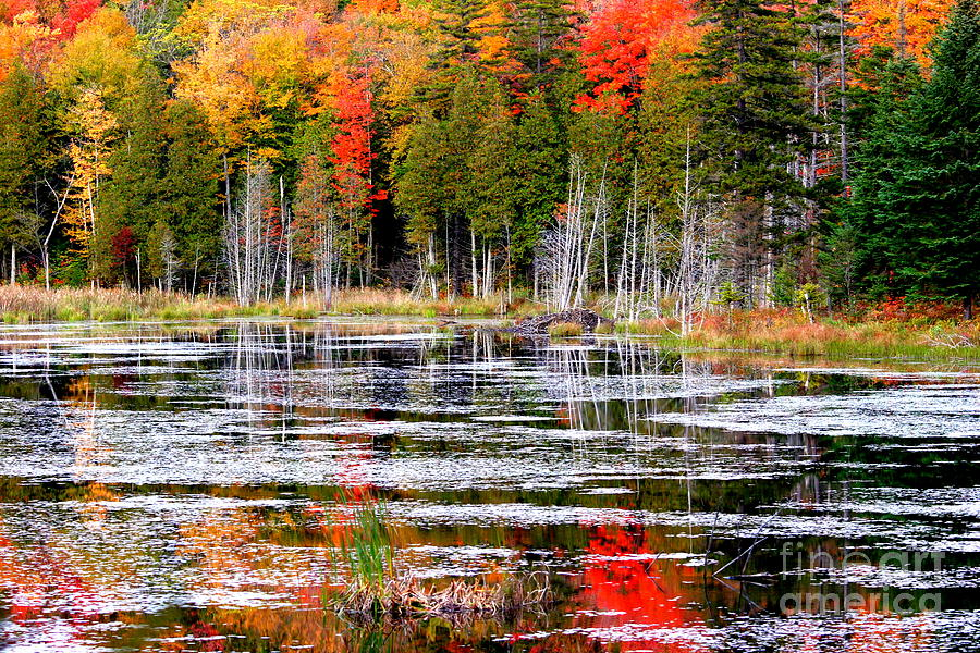 Colorful Photograph - Fall In Maine by Arie Arik Chen