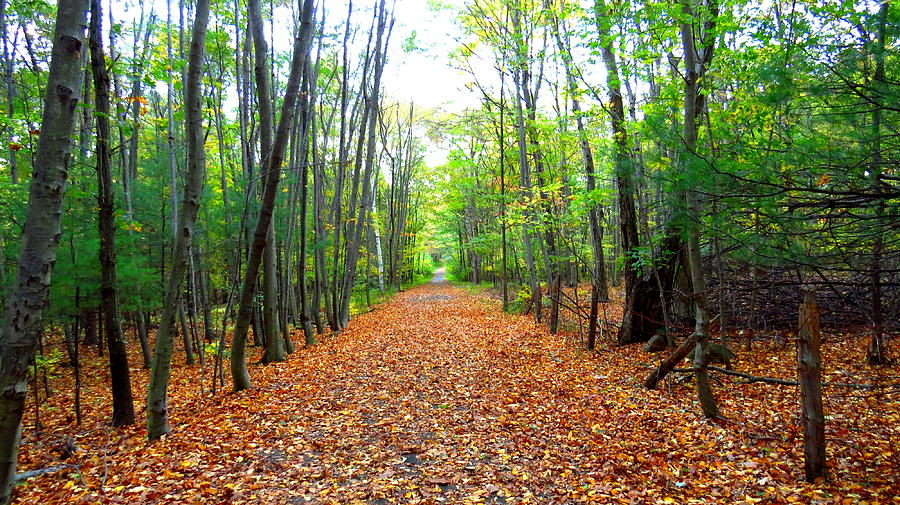 Fall Photograph - Fall In New England by Stephen Melcher