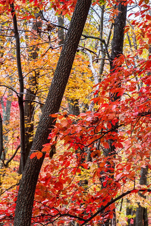 Nc Photograph - Fall In The Forest by John Haldane