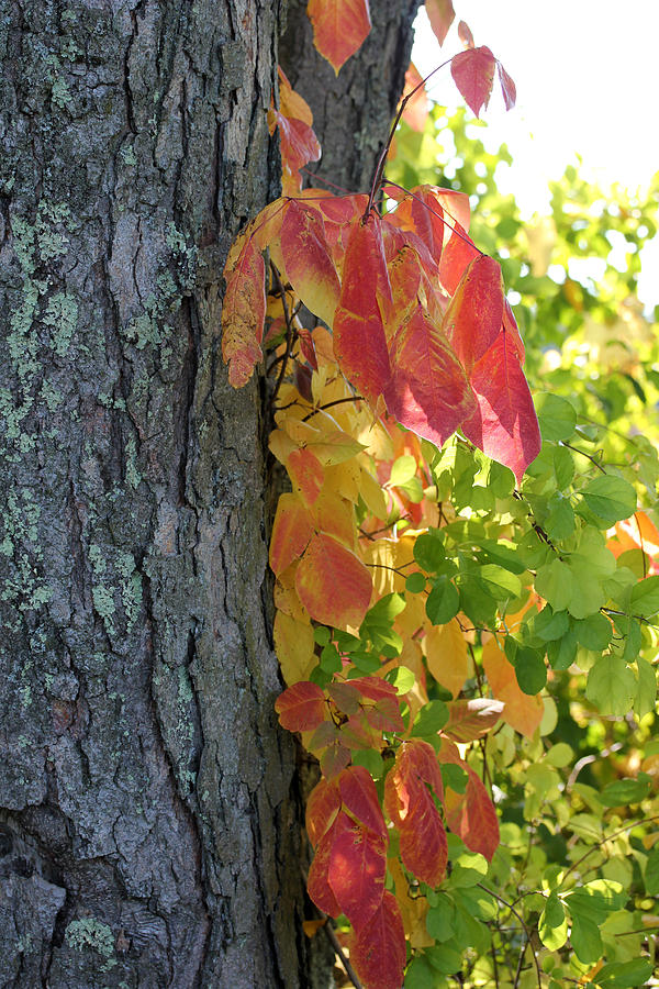 Fall Photograph - Fall In The Orchard by Mary Bedy