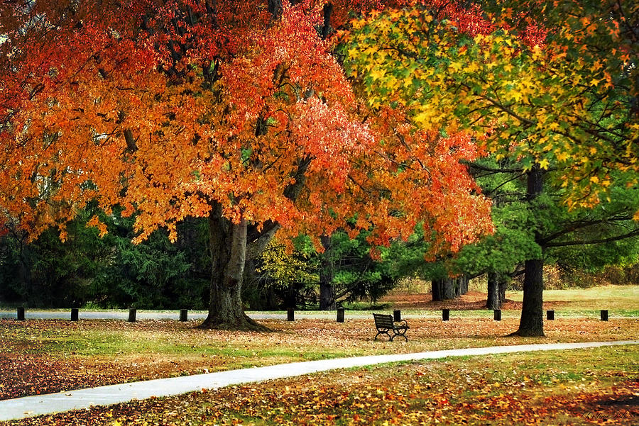 Fall Photograph - Fall In The Park by Christina Rollo
