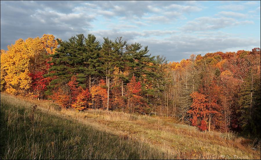 Cuyahoga Valley National Park Photograph - Fall In The Valley by Daniel Behm