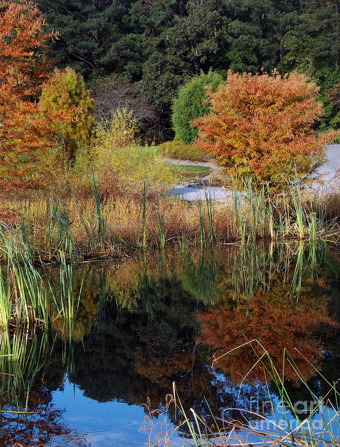 Scenic Tours Photograph - Fall In The Wetlands by Skip Willits