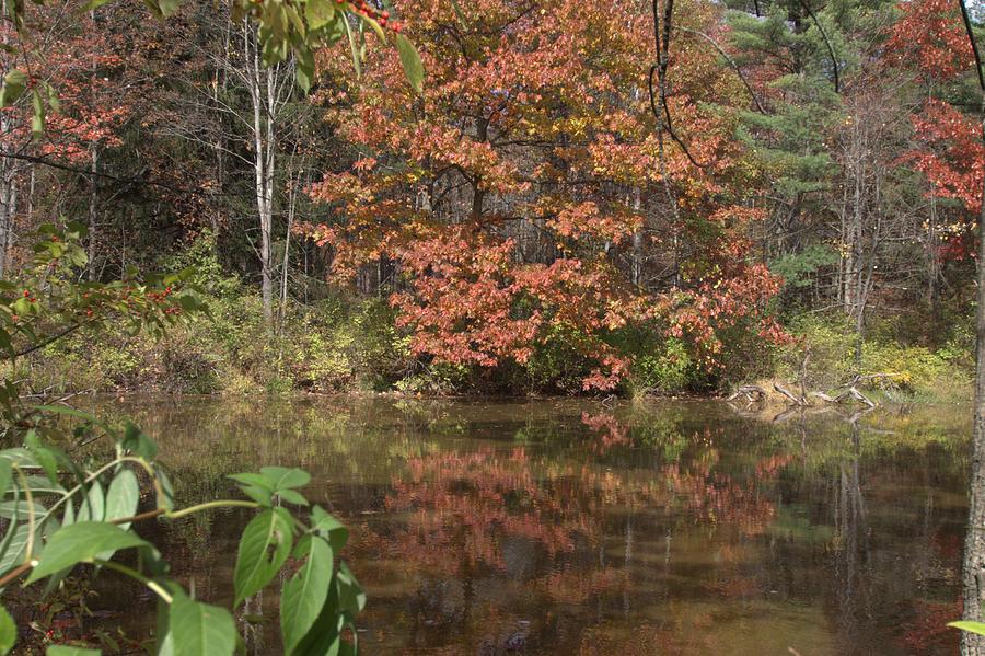 Fall In Upsrate Ny Photograph by Edward Kocienski