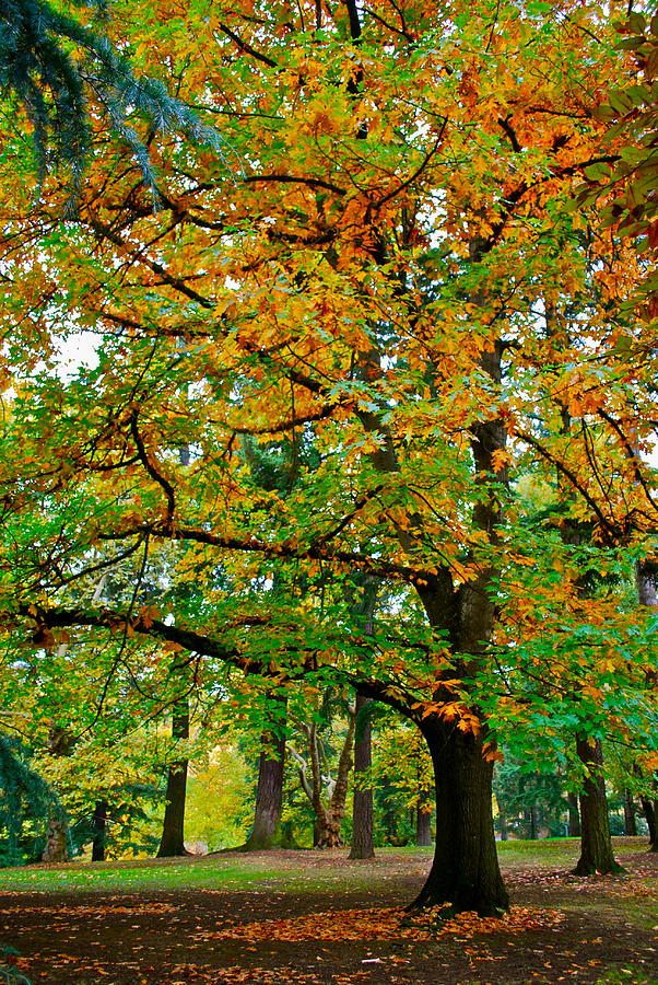 Landscape Photograph - Fall Kissing The Leaves  by Rae Berge