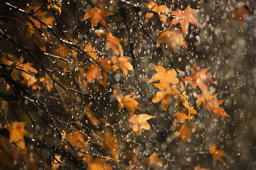 Fall Leaves And Raindrops Photograph by Tim Leimkuhler