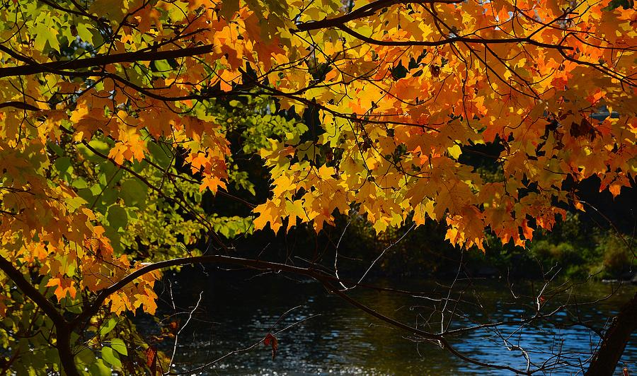 Nature Photograph - Fall Leaves by Charles Owens