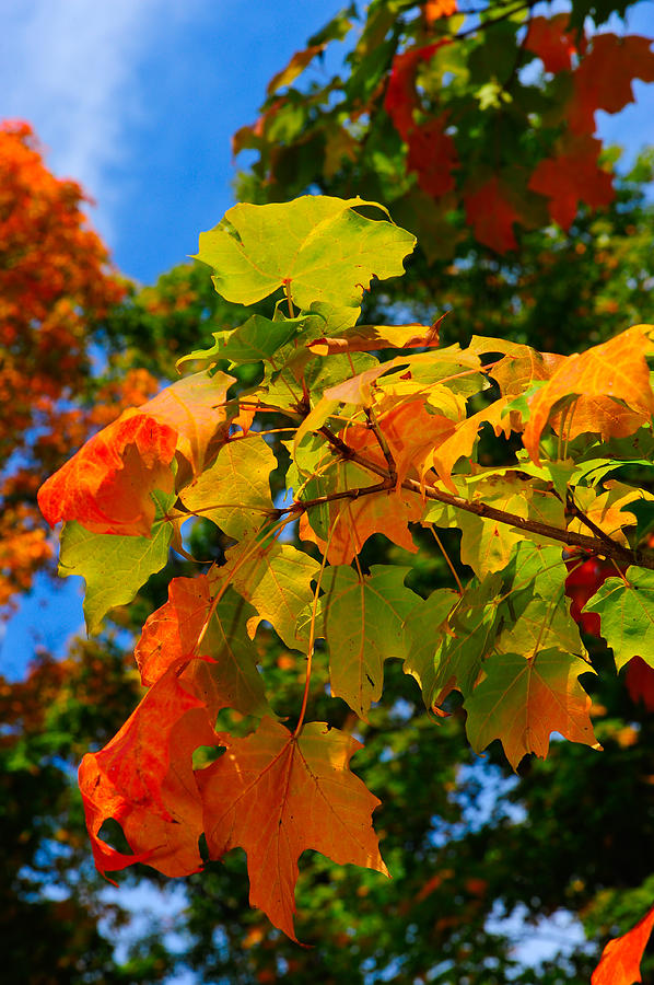 Autumn Photograph - Fall Leaves by Don and Bonnie Fink