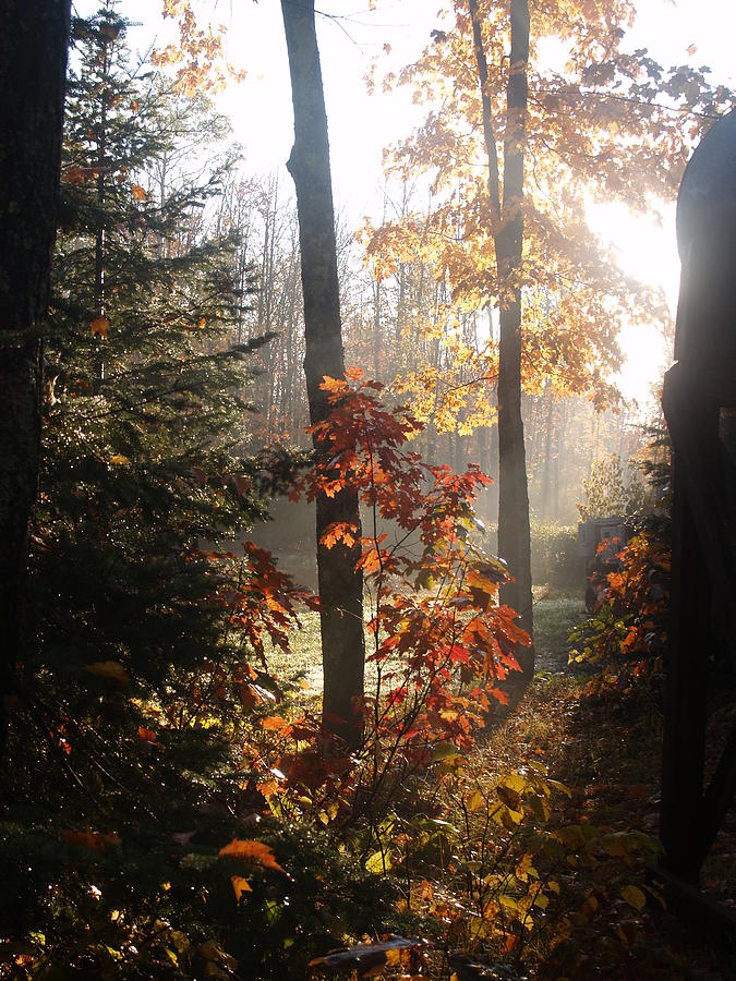 Susan Photograph - Fall Leaves In Morning by Susan Crossman Buscho