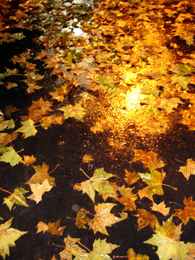 Nature Photograph - Fall Leaves by Michel Mata