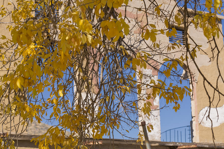 Jerome Photograph - Fall Leaves On Open Windows Jerome by Scott Campbell