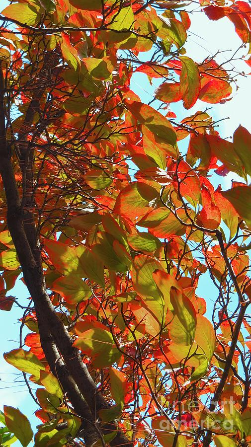 Autumn Leaves Photograph - Fall Leaves by Scott Cameron