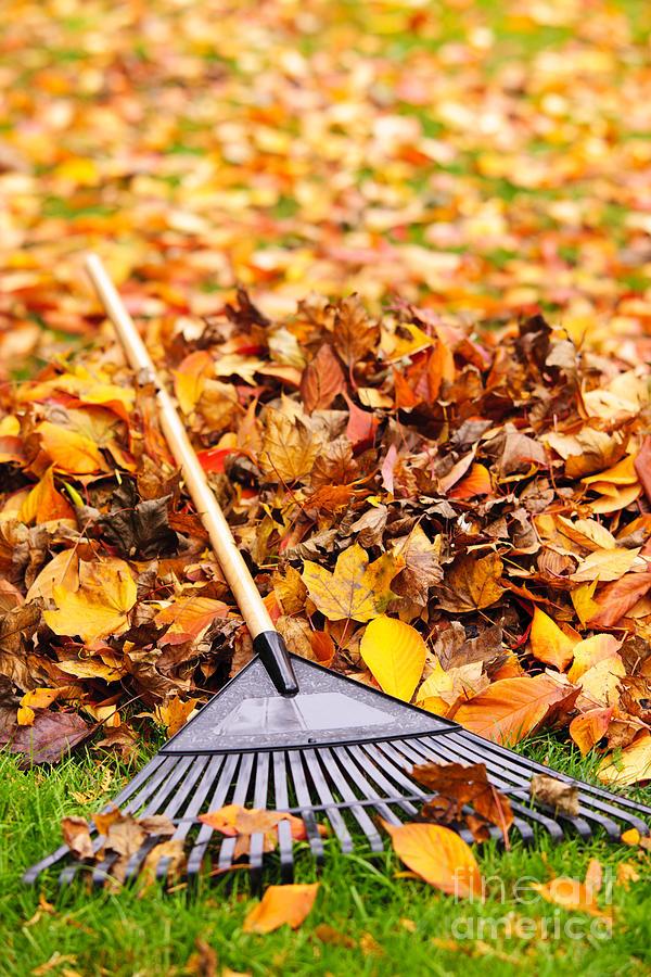 Rake Photograph - Rake And Fall Leaves by Elena Elisseeva