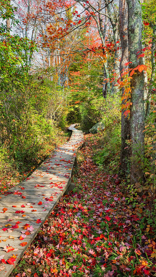 Autumn In New England Photograph - Fall Morning by Bill Wakeley