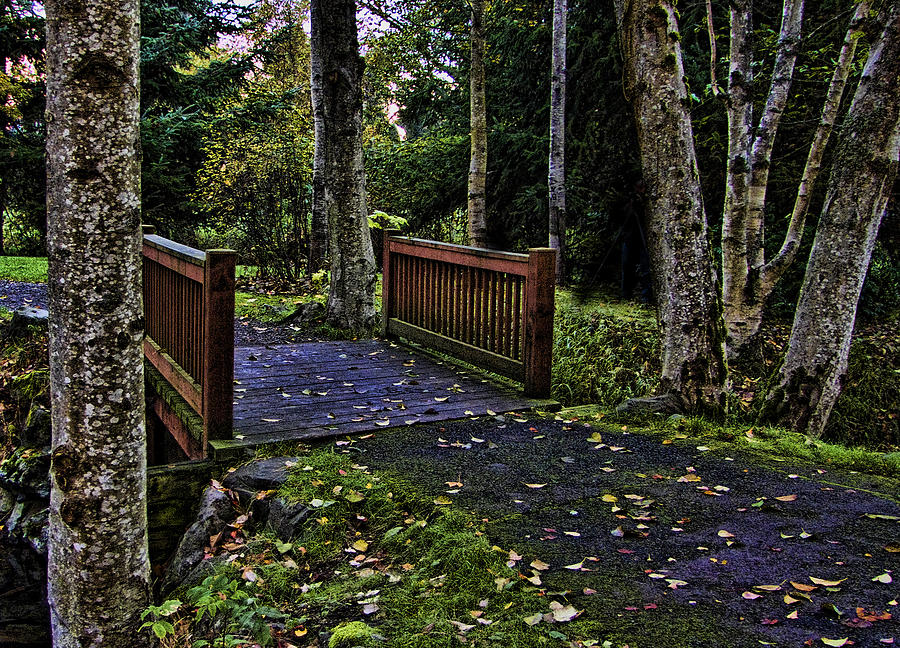 Fall Photograph - Fall Morning by Ron Roberts