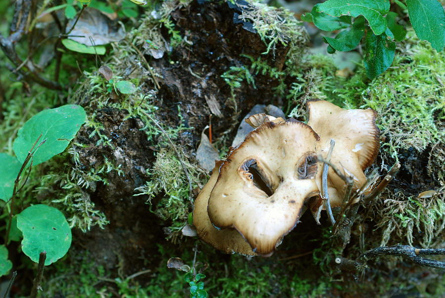 Fall Mushrooms by Jan Piet